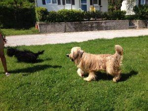 Campeggio col cane